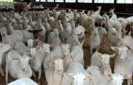 मुंब्रा बकरा मंदी पर रख रही है टीएमसी नज़र